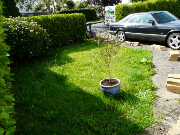 bray-garden-before-2